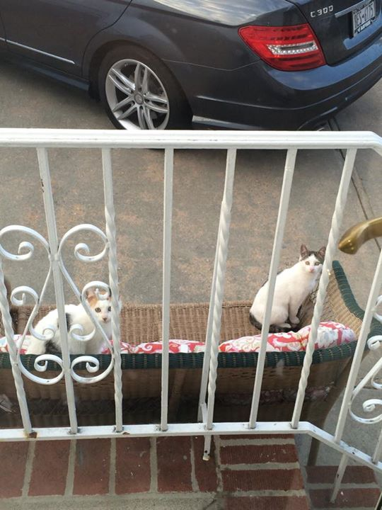 Two Stray Kittens Living in My Dad's Backyard- Sapphire ...